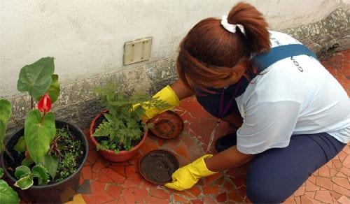 Focos em casas foram encontrados. Foto: ASCOM/Prefeitura de Alfredo Chaves.