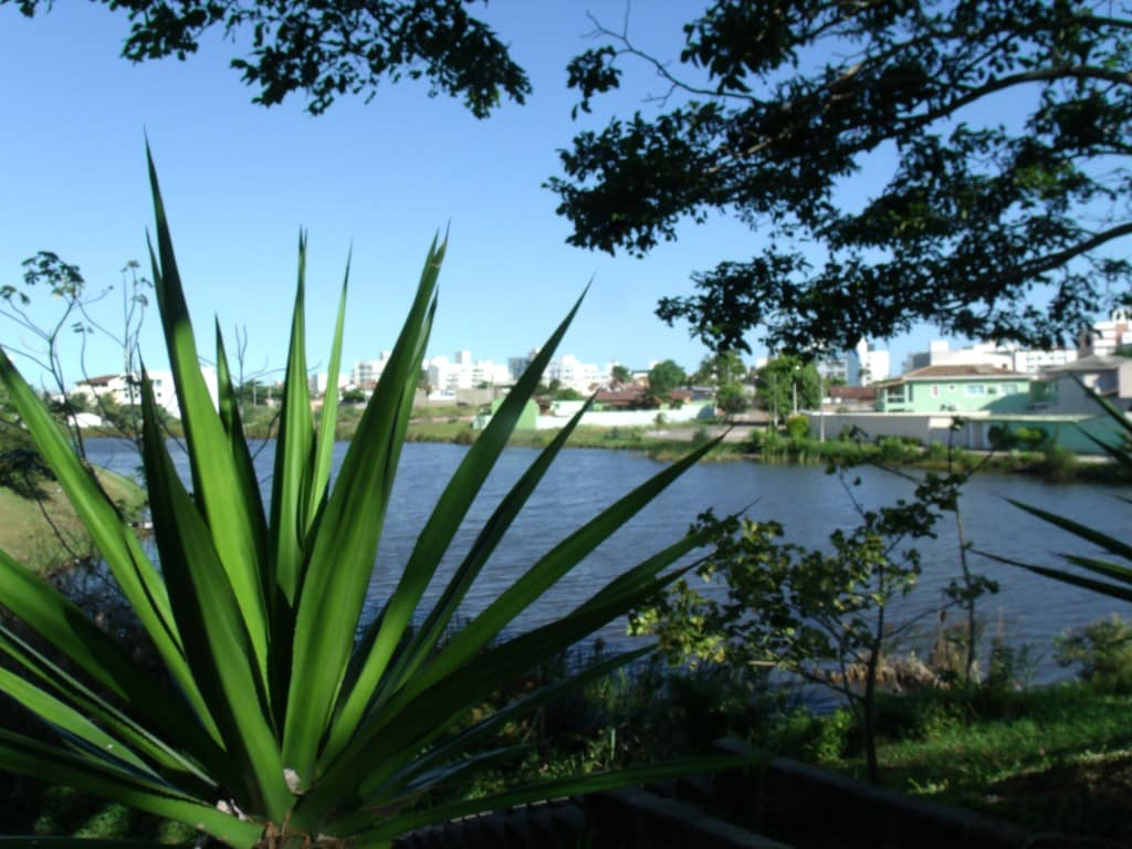 Lagoa onde água da piscina estava sendo jogada - Foto Rosimara Marinho