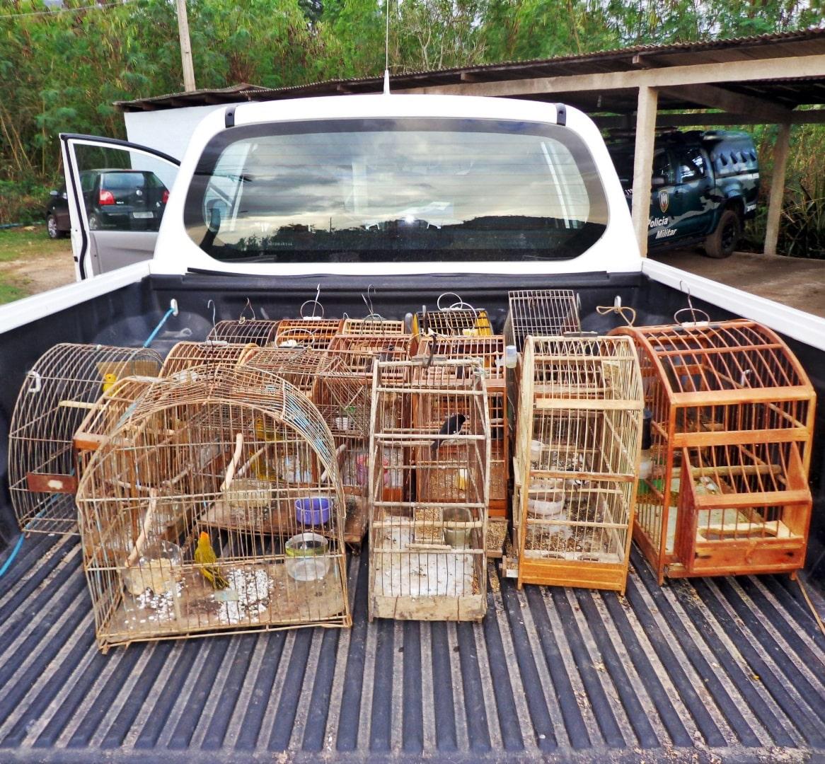 O responsável pelos pássaros foi conduzido à Delegacia de Piúma, para as providências cabíveis