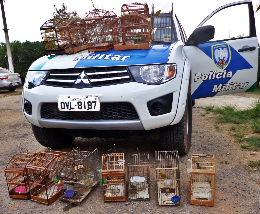 Os animais foram encaminhados à sede do escritório regional do Ibama