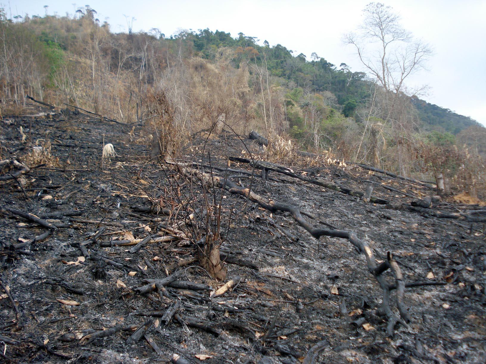 O homem aos militares que teria colocado fogo em uma área de cultivo de café de sua propriedade