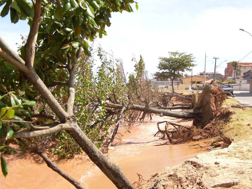Oito árvores foram derrubadas pelo mar na madrugada de hoje. Foto: João Thomazelli/Portal 27