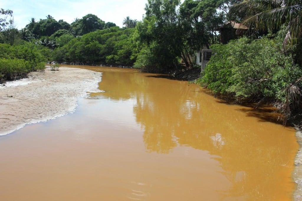 Depois de ficar verde, nesta segunda o rio estava amarelo, com várias espécies mortas nas margens. Foto: João Thomazelli/Portal 27