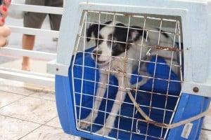 O cachorro ficava preso dentro de um banheiro da casa. Foto: João Thomazelli/Portal 27