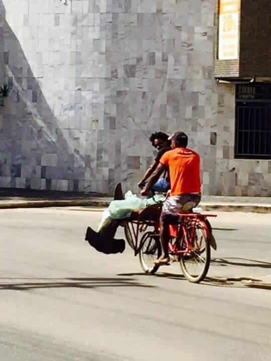 Dois homens levaram o animal em um bicicleta.