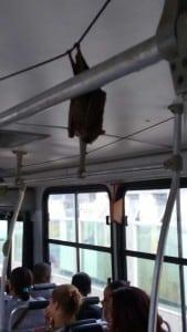 """O """"visitante"""" estava dentro de um ônibus que faz a linha Setiba - Centro. Foto: Wallace Mariano"""